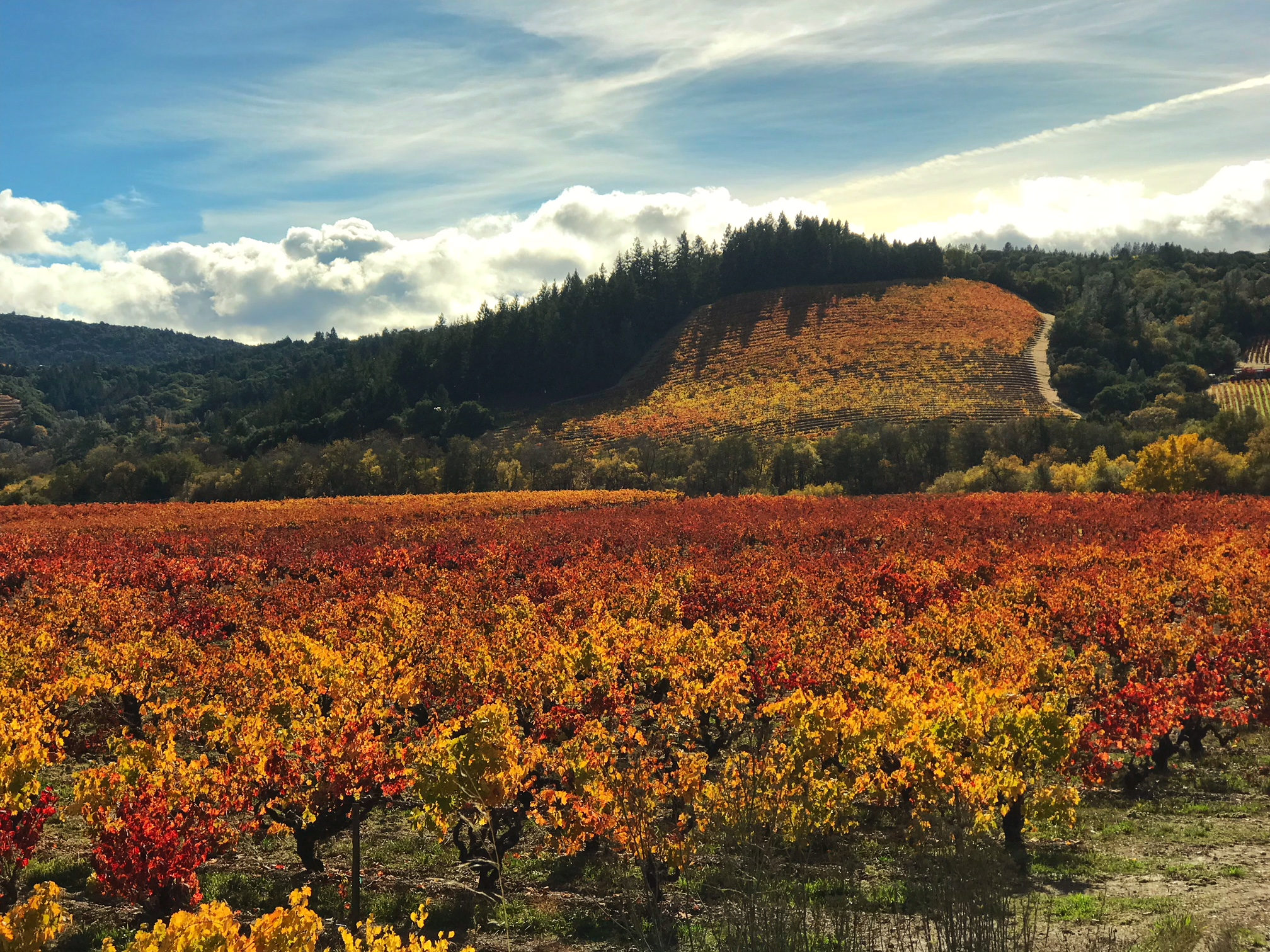 fall colors vineyard
