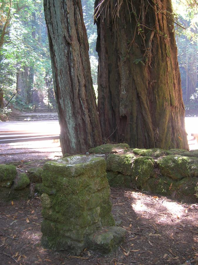 Redwood Armstrong State Park drinking foundation