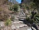 rock path at UC Botanical Garden