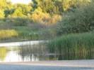 Mokelumne River at Woodbridge Dam