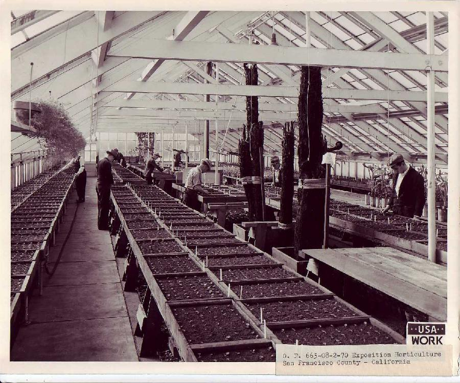 Treasure Island Exposition Horticulture
