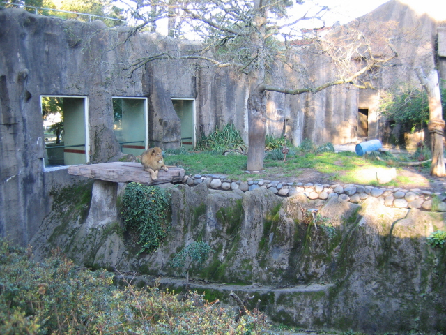 San Francisco Zoo Lion Cage