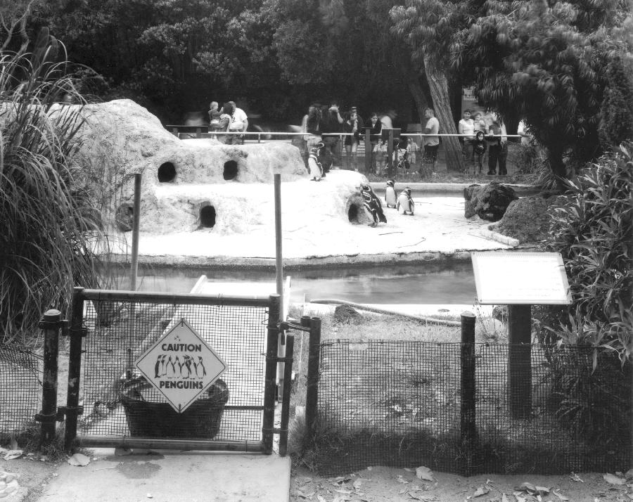 San Francisco Zoo Penguin Enclosure