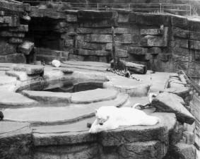 San Francisco Zoo Polar Bear Exhibit