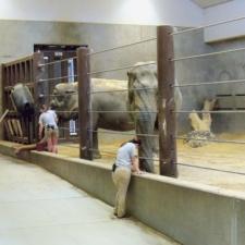 Interior enclosure, Elephant House, National Zoo - Washington DC