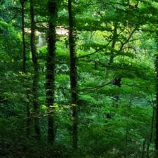Woodland atRock Creek Park - Washington DC