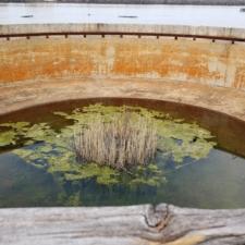 Nature establishing itself in an unused sedimentation tank