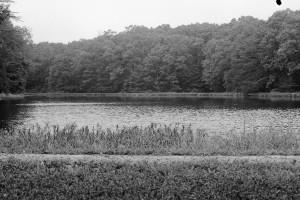 Clark oak lake