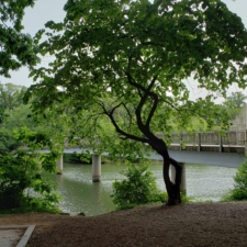 Footbridge to Theodore Roosevelt Island - Washington DC