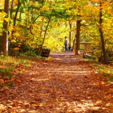 Path and footbridge on Theodore Roosevelt Island - Washington DC