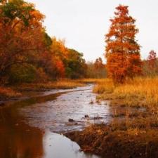 Path in Fall on Theodore Roosevelt Island - Washington DC