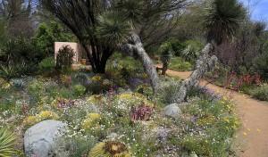 Wildflowers at Boyce Thompson Arboretum