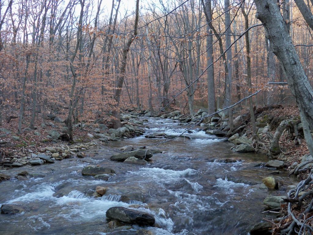 Cunningham Falls State Park Stream