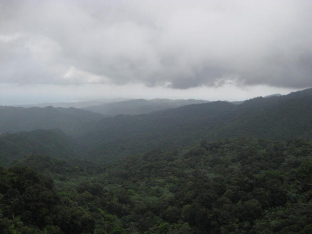 View From Yokahu Lookout Tower