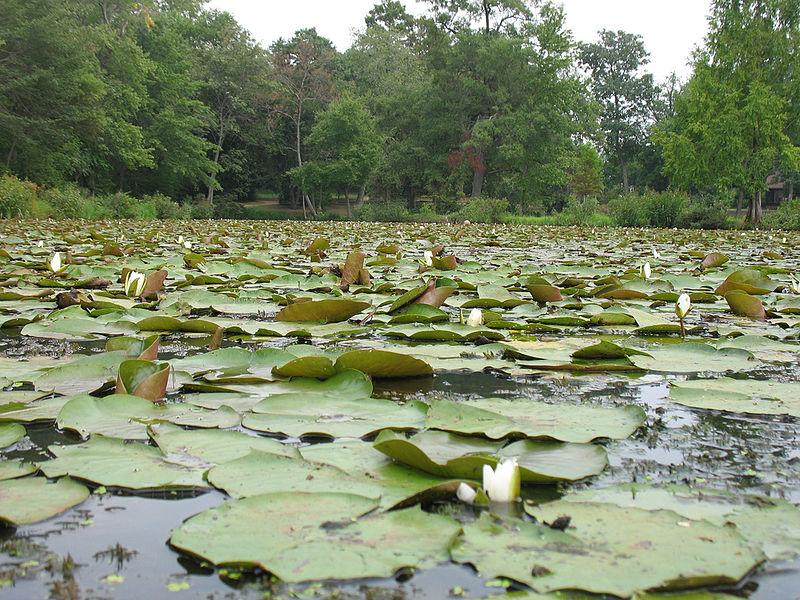 Kenilworth Park and Aquatic Gardens - Washington DC - Living New Deal
