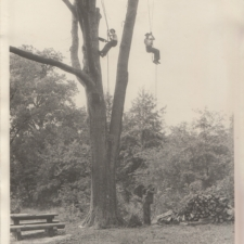CCC Tree Surgery,Fort Hunt Park