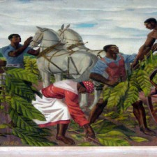 """""""Tobacco Picking in the Late Colonial Era"""""""