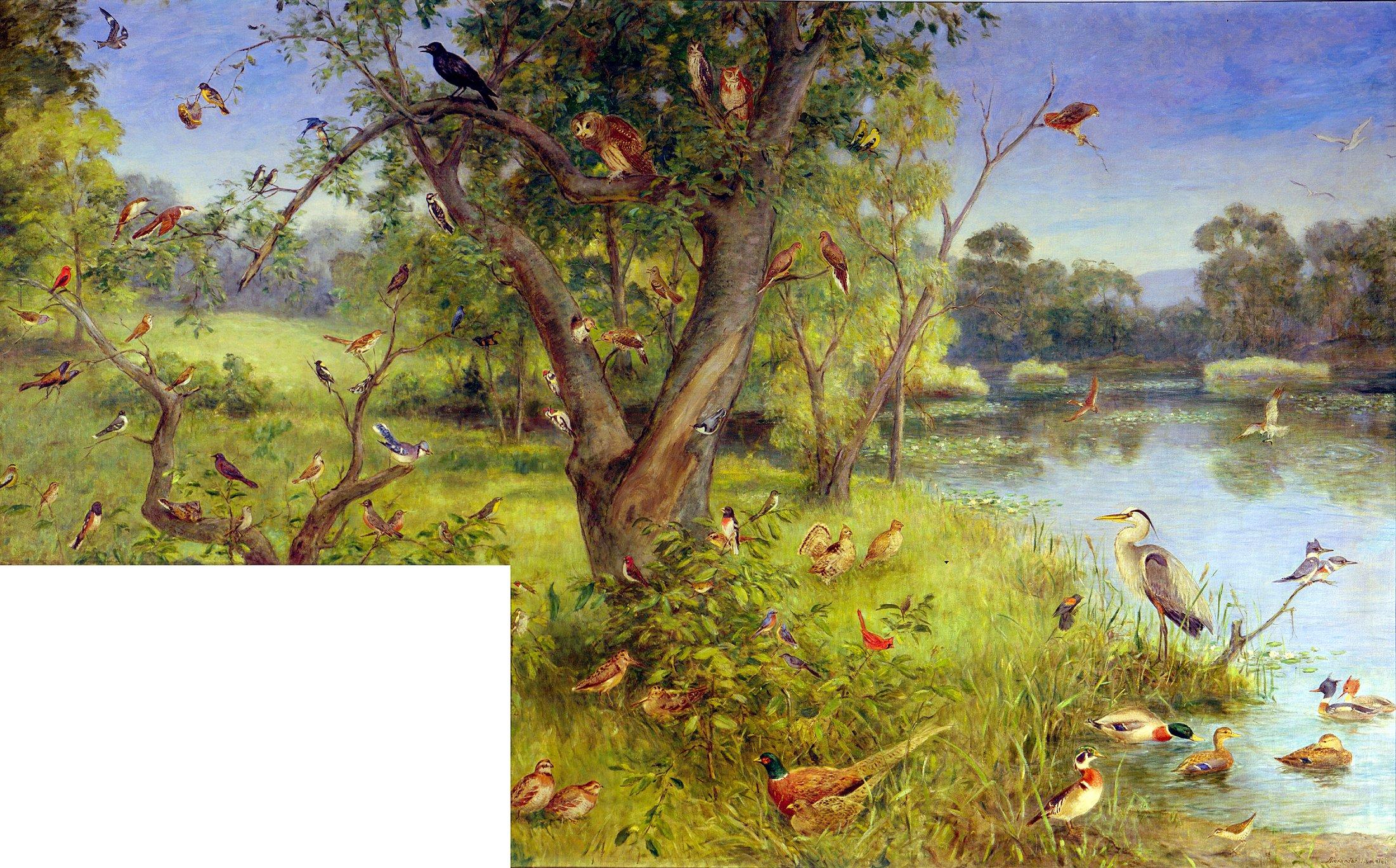 """Birds of Connecticut"""