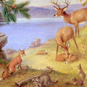 """Mammals of Connecticut"""