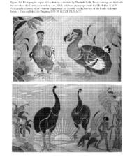 Fulda sketches for bas-relief, Bird House, National Zoo - Washington DC