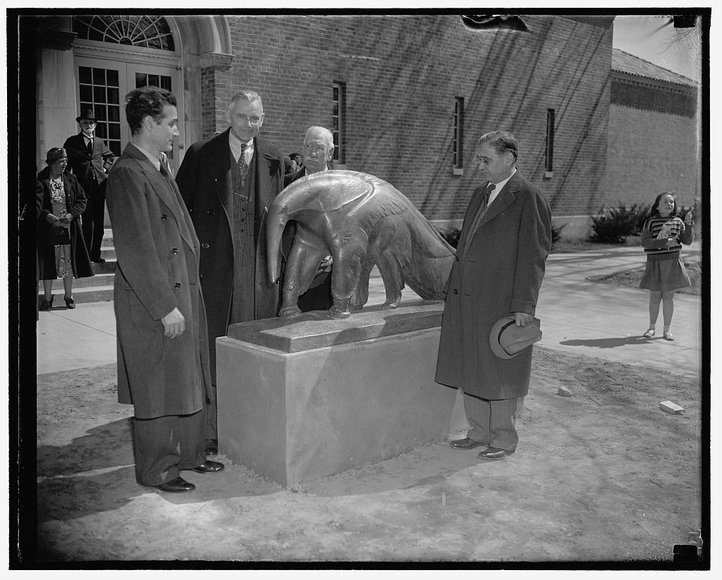 Washington, D.C., March 25. The lowly anteater was immortalized at the Washington Zoo today when its statue was unveiled with appropriate ceremonies. The statue of bronze, six feet long, three feet high, was done by Edwin Springweiler. In the photograph, left to right: Edwin Springweiler, Dr. Alexander Wetmore of the Smithsonian Institution, who unveiled the statue, Head Keeper William Blackburn, and Dr. William M. Mann, Director of the National Zoological Park.