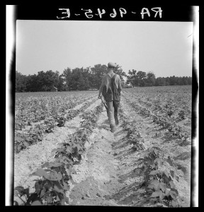 North Carolina tenant farmer, photographed by the WPA in 1936.