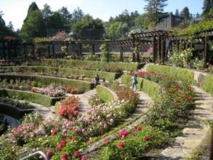 Berkeley, California Rose Garden