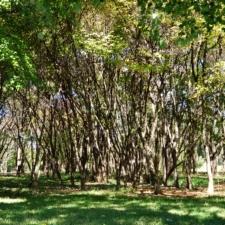 Thicket at National Arboretum - Washington DC