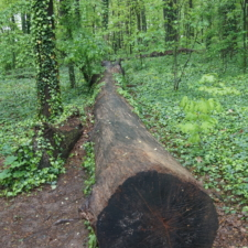 Woodland atNational Arboretum - Washington DC