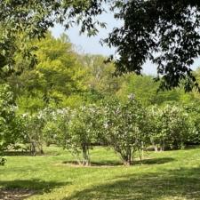 Meadow at National Arboretum - Washington DC