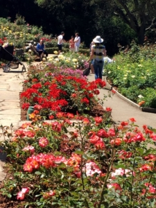 Berkeley Rose Garden, Berkeley, California