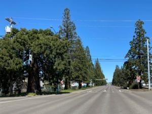 Sequoias Milport Road
