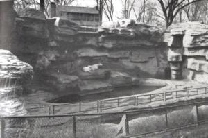 Cincinnati Zoo: Bear Pit - Cincinnati OH