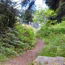 Trail atPatrick's Point State Park - Trinidad CA