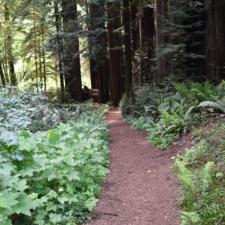 Trail in Prairie Creek Redwoods State Park - Orick CA