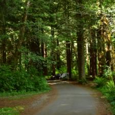 Campground atPrairie Creek Redwoods State Park - Orick CA
