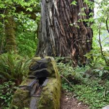 Stone stove at picnic area, Prairie Creek Redwoods State Park - Orick CA