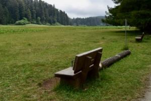 View over the elk prairie, Prairie Creek Redwoods State Park - Orick CA