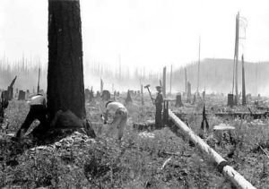 CCC forestry