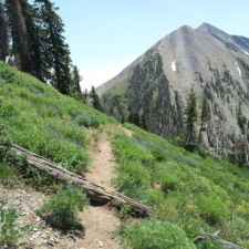 Mount Nebo North trail - Mt Nebo UT