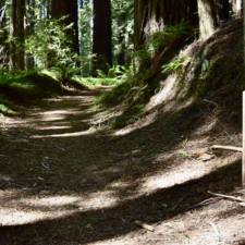 Kent-Mather loop trail and marker -Humboldt Redwoods State Park CA
