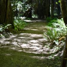 Rockefeller Loop Trail -Humboldt Redwoods State Park CA