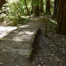 Rockefeller Loop Trail - Humboldt Redwoods State Park CA