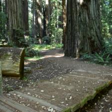 Founders Grove loop trail -Humboldt Redwoods State Park CA