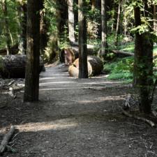 Frederick Lane loop trail - Humboldt Redwoods State Park CA
